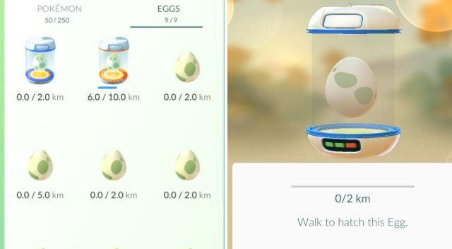 Hatch Eggs